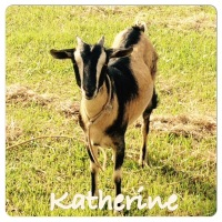 Meet Our Goats {Katherine & Laura}